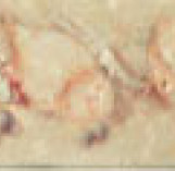 LIST BOTTICINO BEIGE фриз 50*200