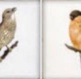 FORLIDECORBIRDS