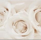 Camelia inserto flower 297*600